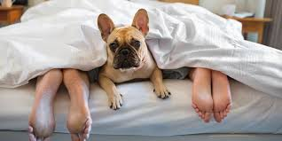 Does Your Pet Sleep In The Bed?